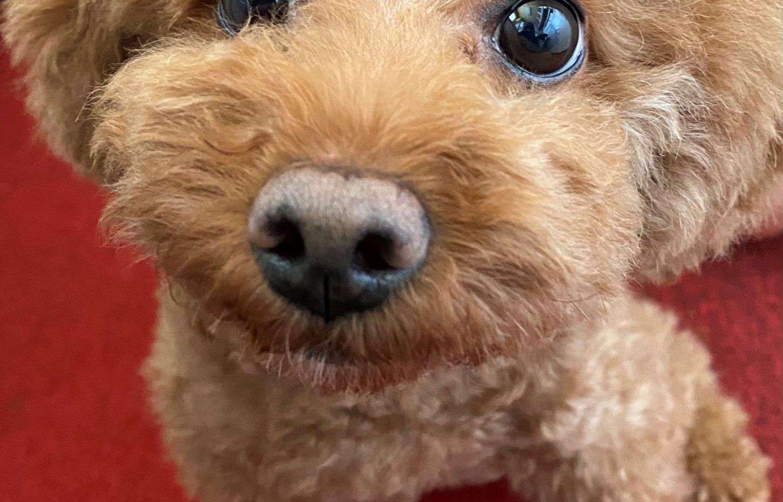 子犬のアップ画像
