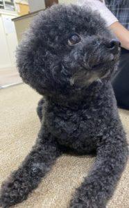 長専寺の犬